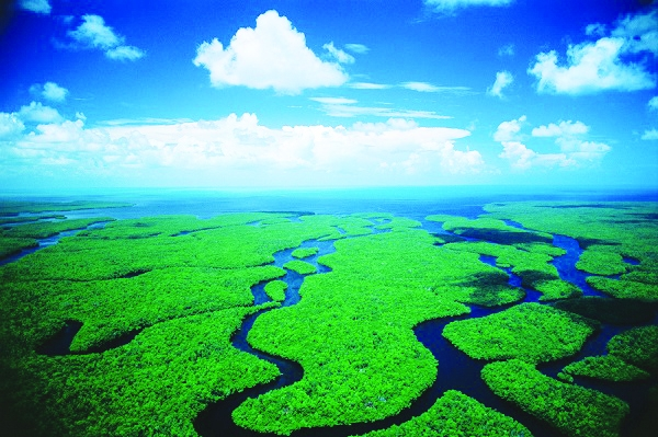 Florida To Buy 20,000 Acres In Everglades To 'Permanently Save' It From Oil Drilling