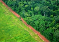 Contrasting adjacent forest and agricultural landscapes near Rio Branco, Acre, Brazil