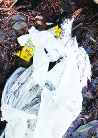 Another sea bird dies entangled in plastic waste, Summerland Key, Florida