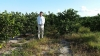 John Paul III in front of Valencia Crops which will top off at 8 foot tall and are scheduled to be picked in May 2016