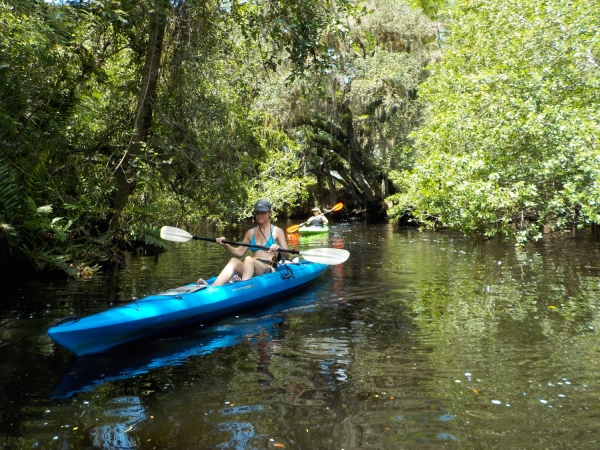 Navigating the Heart of Estero: A Few Hours Upon the Estero River