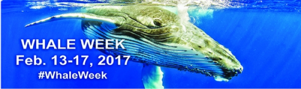 WHALE WEEK - FEB 13th - 17th 2017