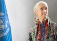 Dame Jane Goodall primatologist, conservationist and United Nations Messenger of Peace, Sept. 2015