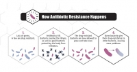 Scientists have discovered bacteria that is resistant to all antibiotics — including last-resort drugs.