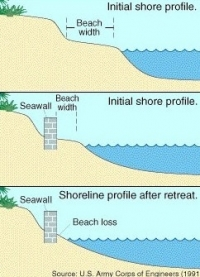 Seawalls Mean Death to the Beaches
