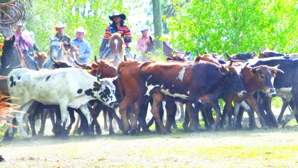 Immokalee Cattle Drive & Jamboree