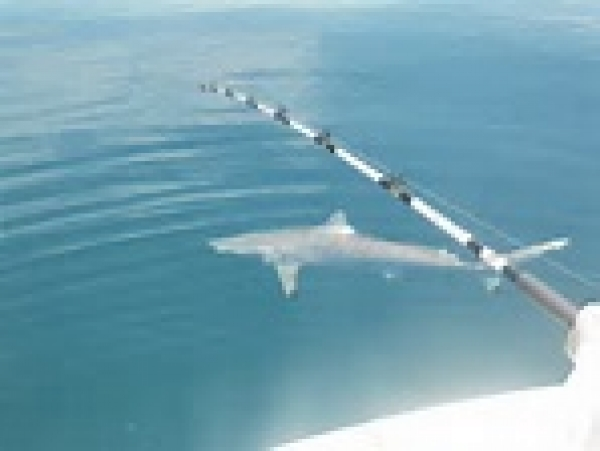 COMMUNITY CURRENTS - Bonita Springs Council, Public get Presentation on Local Sharks