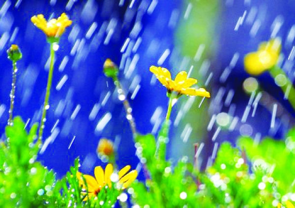 April Showers Help You Flower